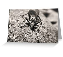 insect Greeting Card