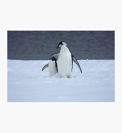 Grumpy little penguin Photographic Print
