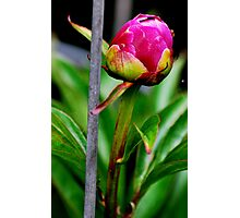 Pink Steel Photographic Print