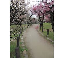 Osaka Blossoms Photographic Print