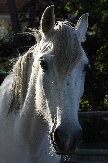 White horse 1790 by João Castro