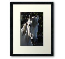 White horse 1790 Framed Print
