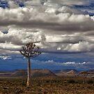 African Wilderness by Jill Fisher