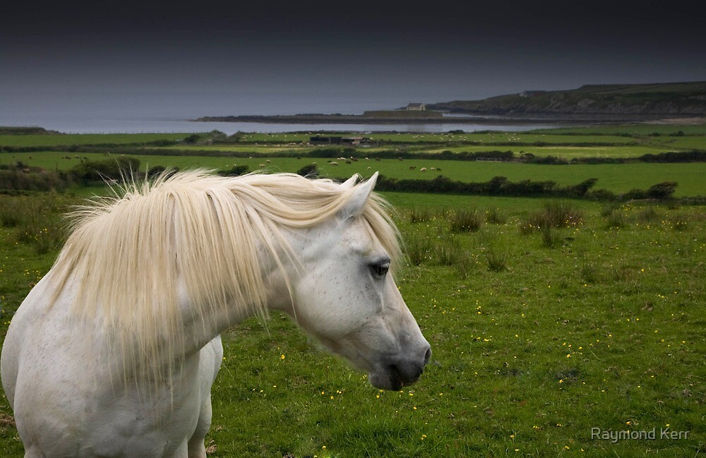 Horse with a view  by Raymond Kerr