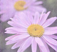 dreaming daisies by Iris Lehnhardt