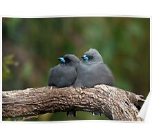 Two Grey Birds Poster