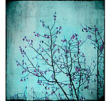 pink berries Photographic Print
