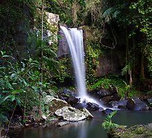 Curtis Falls - Mount Tamborine by Greg Thomas