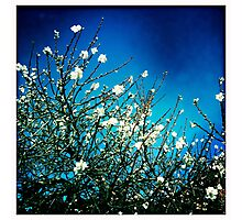 The first hint of spring Photographic Print