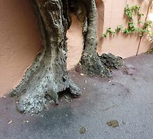 Rooted On Cap Ferrat by Fara