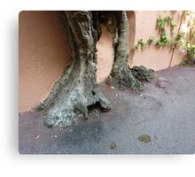 Rooted On Cap Ferrat Canvas Print