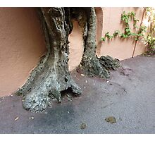 Rooted On Cap Ferrat Photographic Print