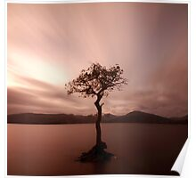Milarrochy Bay Sunset Poster