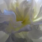 Soft White with a Touch of Yellow by Hans Bax