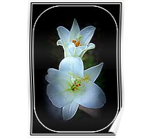 Easter Lillies Poster