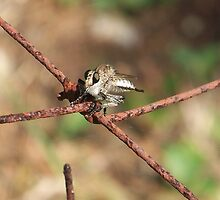 Robber Fly by Penny Odom