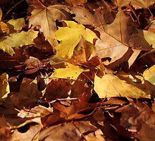 Autumns leaves by PhotoTamara