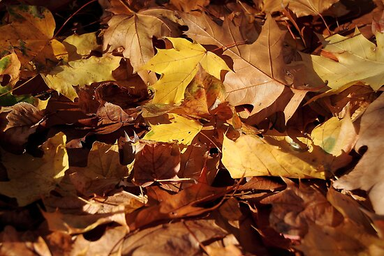 Autumns leaves by PhotoTamara