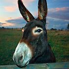 Donkey Business by FranJ