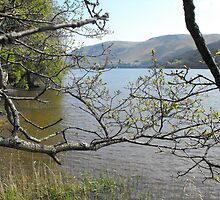 Loch Ness from the south bank by alanf1