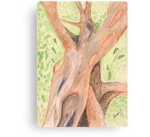 Cinnamon Tree  Canvas Print