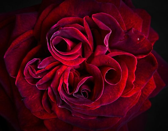 Red Beauty by Geoff Carpenter