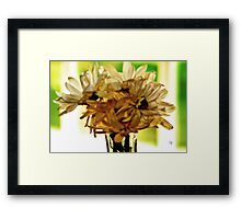 Backlit Daisies Framed Print