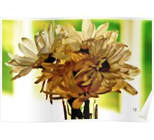 Backlit Daisies Poster