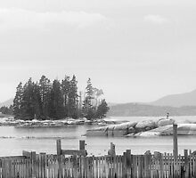 Harbor, Stonington, Maine by Patty Gross