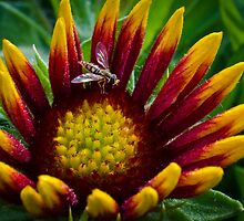 Gaillarde with a visitor by Richard Fortier