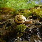 yay for snail day! by Fran E.