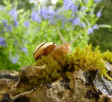 snailoooh by Fran E.