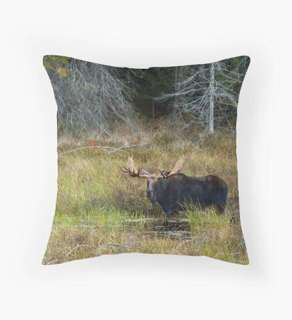 Bull Moose, Algonquin Park Throw Pillow
