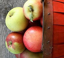 A large basket of red apples by vvfineartphotog