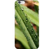 A Blade of Grass with Dew Drops iPhone Case/Skin
