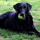 Sam loves to play ball by skreklow