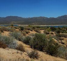 Bartlett Lake Panorama by John  Kapusta