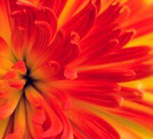 orange-red flower Sticker
