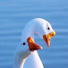 Silly Goose! by Monte Roberts