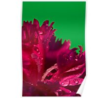 Pink or Green Poster