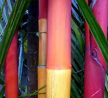 Stick Palm Tree Trunks, Sabah, Malaysia by Angela Gannicott