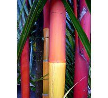 Stick Palm Tree Trunks, Sabah, Malaysia Photographic Print