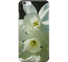 Daffodils 1 iPhone Case/Skin