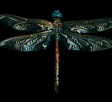 Dragon Fly  by Marvin Hayes