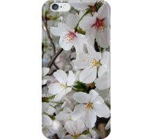 Cherry Blossoms 1 iPhone Case/Skin