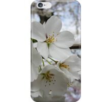 Cherry Blossoms 2 iPhone Case/Skin