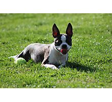 A Boston & Her Ball Photographic Print
