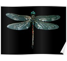 DragonFly Fly Poster