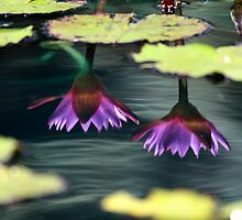 Water Lilly Reflection #4 by Al Mechler