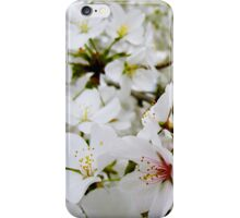 Cherry Blossoms 5 iPhone Case/Skin